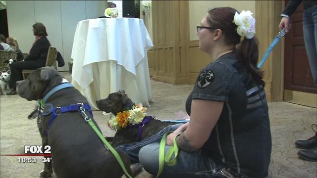 Detroit Dog Rescue Holds Dog Fashion Show