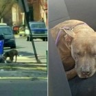 Dog Living on Pennsylvania Streets All Winter Finally Rescued