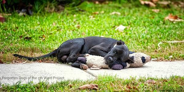 Lonely Dog Finds Comfort in a Forsaken Teddy