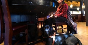 Restaurant Manager Fired for Not Serving Woman With Guide Dog