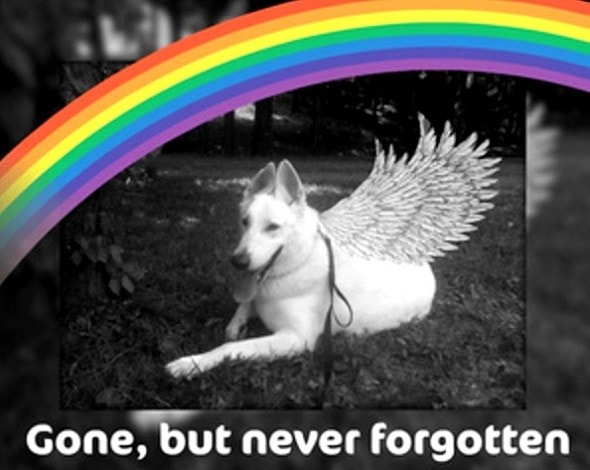 3.24.16 - Bereavement Day for Pet Owners0