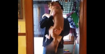Dog Demands to Be Held When Her Daddy Finally Gets Home