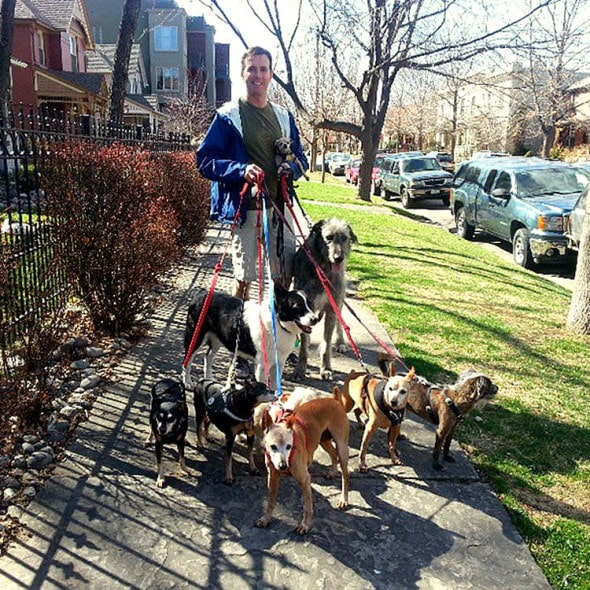 3.25.16 - Man Is Addicted to Adopting Senior Animals No One Else Wants10