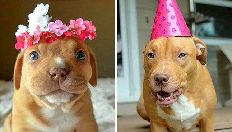 Puppy No One Thought Would Survive Celebrates 1st Birthday