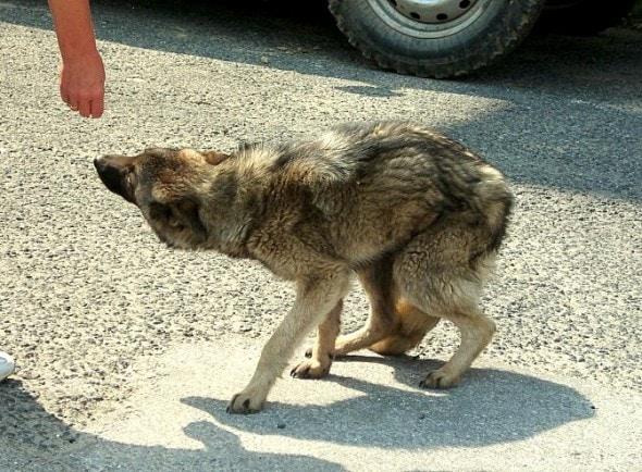 3.25.16 - Rudozem Street Dog Rescue
