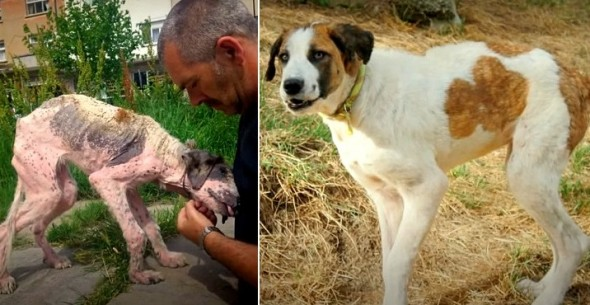 3.25.16 - Rudozem Street Dog Rescue - Khaleesi