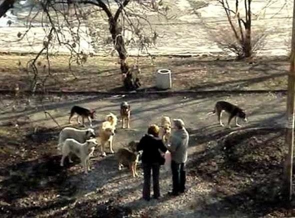 3.25.16 - Rudozem Street Dog Rescue2