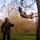 "Acrobatic Dog Practices ""Tree Bouncing"""