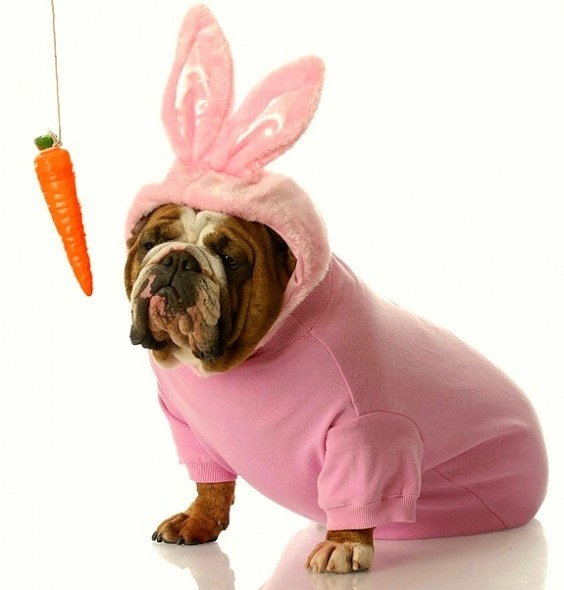 3.26.16 - Dogs Who Are Not Happy About Easter0
