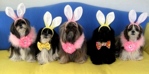 3.26.16 - Dogs Who Are Not Happy About Easter10