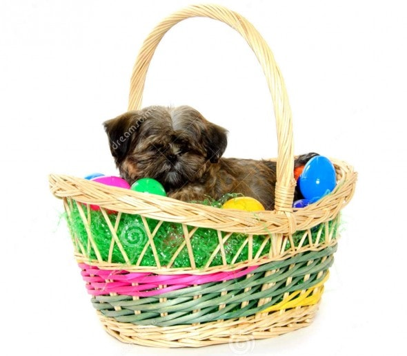 3.26.16 - Dogs Who Are Not Happy About Easter12