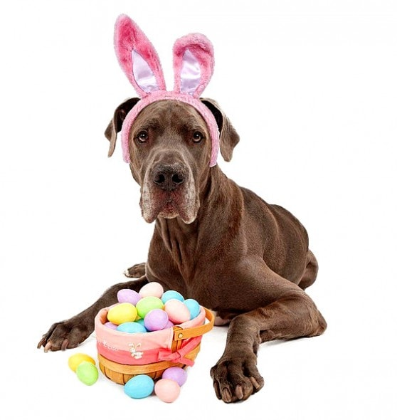 3.26.16 - Dogs Who Are Not Happy About Easter2