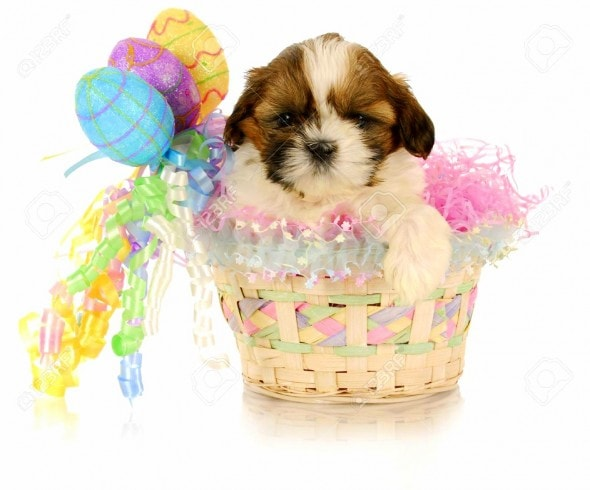 3.26.16 - Dogs Who Are Not Happy About Easter3