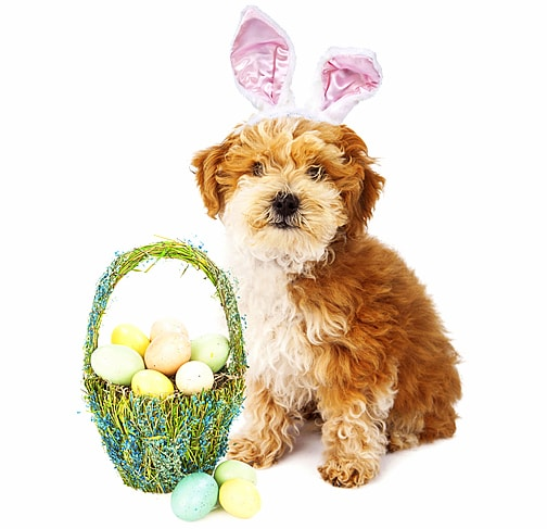 3.26.16 - Dogs Who Are Not Happy About Easter5