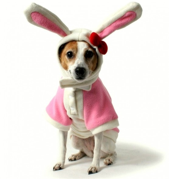 3.26.16 - Dogs Who Are Not Happy About Easter7