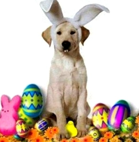 3.26.16 - Dogs Who Are Not Happy About Easter8