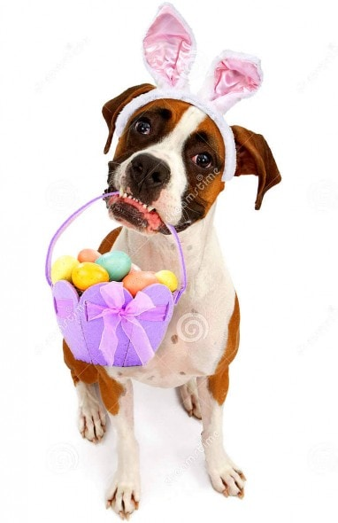 dogs who are less than thrilled that it�s easter