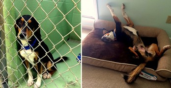 Heart-Touching Before and After Photos of Shelter Dogs