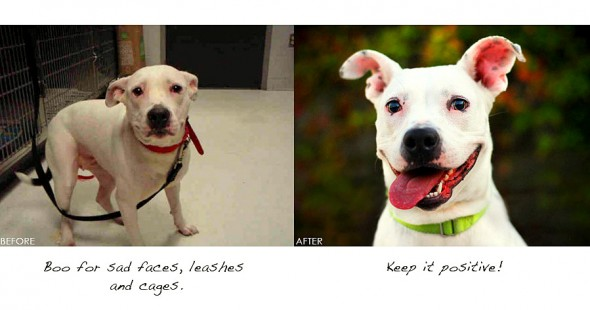 3.26.16 - Shelter Dogs Before and After1