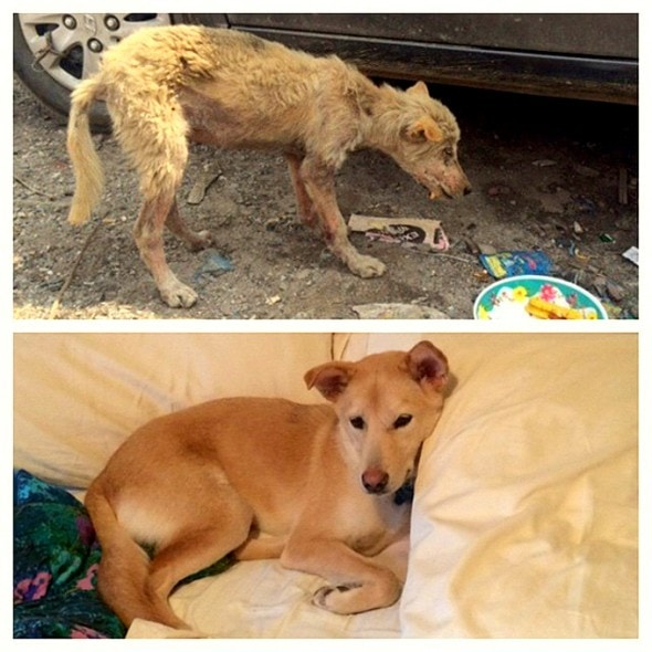 3.26.16 - Shelter Dogs Before and After10