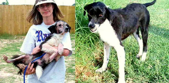 3.26.16 - Shelter Dogs Before and After17
