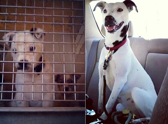 3.26.16 - Shelter Dogs Before and After18