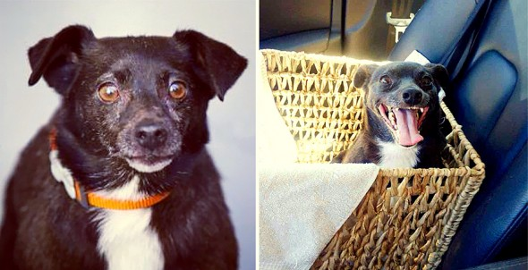 3.26.16 - Shelter Dogs Before and After19