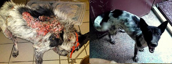 3.26.16 - Shelter Dogs Before and After21