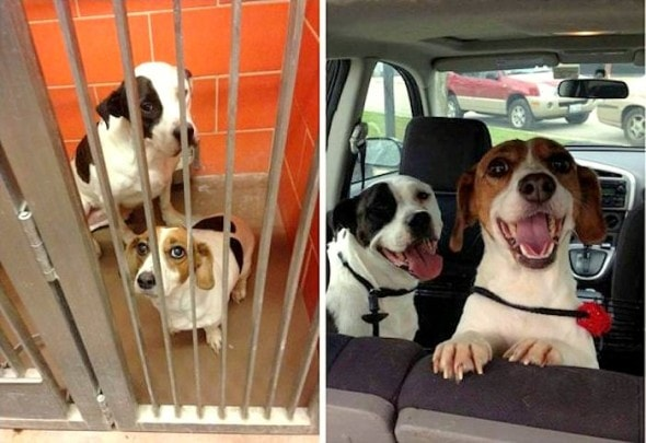3.26.16 - Shelter Dogs Before and After25