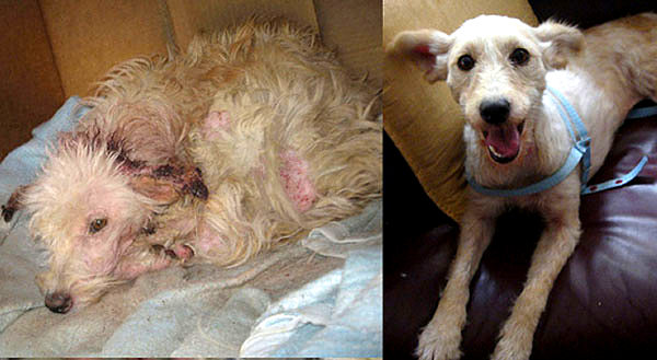 Heart Touching Before And After Photos Of Shelter Dogs
