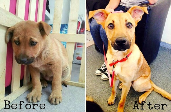 3.26.16 - Shelter Dogs Before and After7
