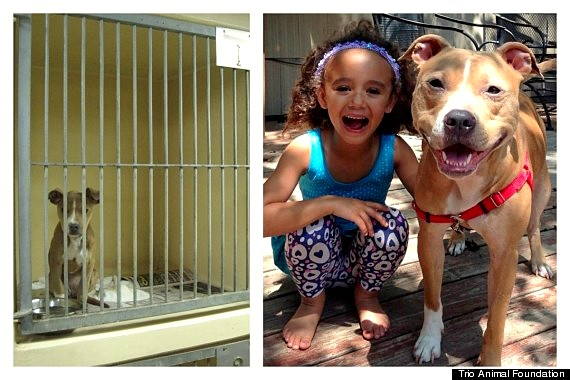 3.26.16 - Shelter Dogs Before and After8