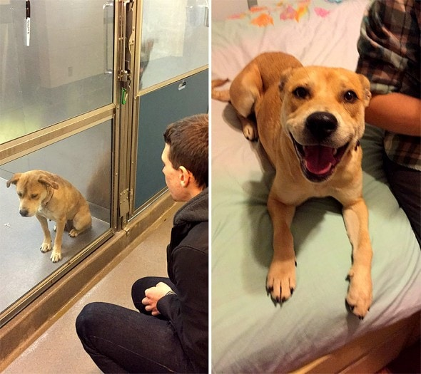3.26.16 - Shelter Dogs Before and After9