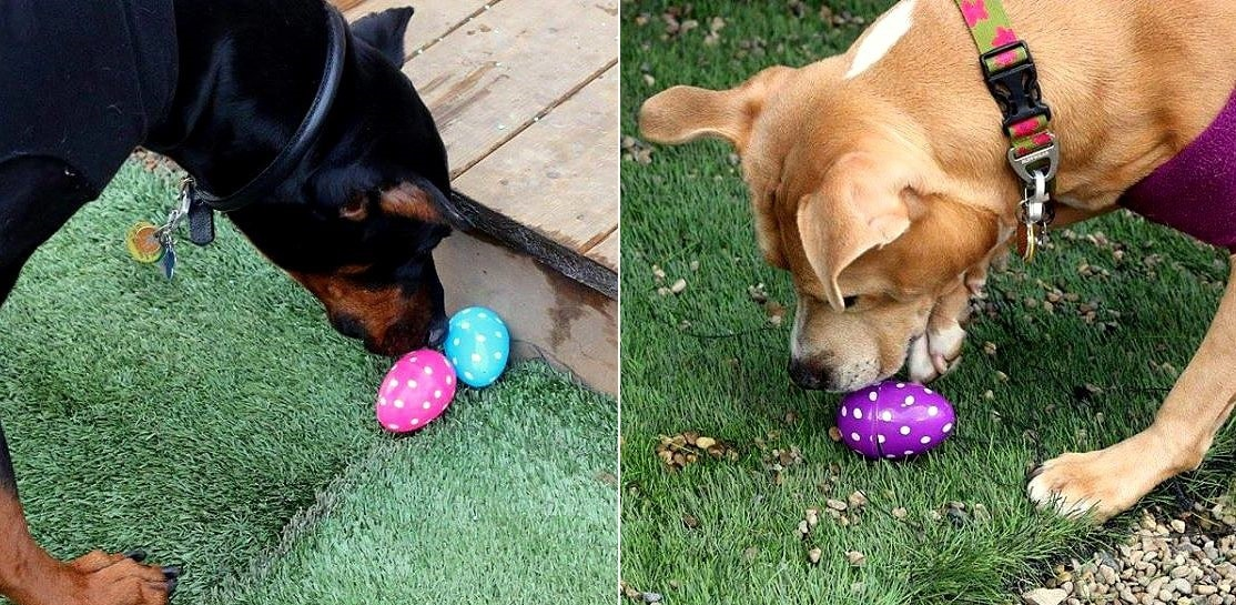 Rescue Group Holds the Cutest Easter Egg Hunt for Rescue Dogs