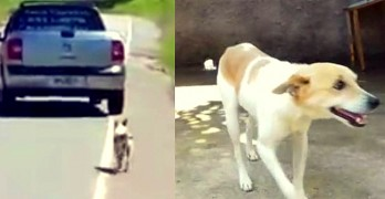 Man Rescues Dog that Is Filmed Being Dumped on the Side of the Road