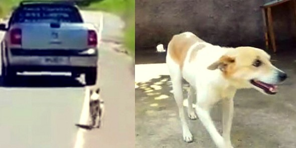 3.29.16 - Dog Dumped on the Side of the Road Rescued1