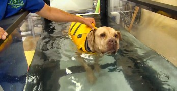Dog Left for Dead is Rescued and Gets Free High-Tech Therapy