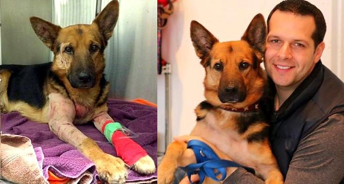 Dog on the Absolute Brink of Death Makes an Unbelievable Recovery