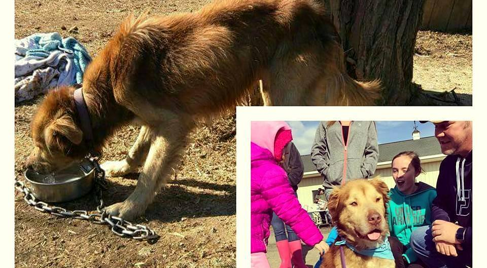 Dog Who Spent His Life on a Chain Has Learned How Wonderful It Is to Be Loved