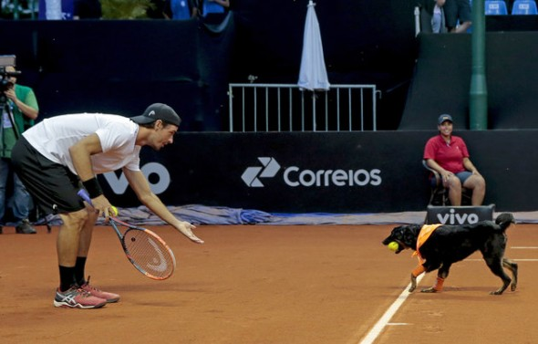 Portugal's Gastao Elias receives a ball from a dog during the Brazil Open tennis tournament in Sao Paulo, Brazil, Thursday, Feb. 25, 2016. Four trained shelter dogs that once roamed the streets of Sao Paulo found themselves center stage at the ATP 250 Brazil Open tournament. The unusual initiative was made to promote the adoption of abandoned street animals. (AP Photo/Leandro Martins)