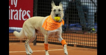 "Shelter Dogs Used as ""Ball Boys"" for Brazil Open"