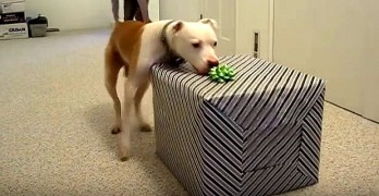 Dying Dog Goes Bonkers Over His Final Birthday Present