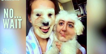 Trade Faces With Your Dog Using Smartphone App