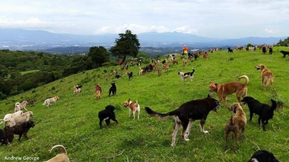 3.31.16 - Costa Rican Sanctuary1