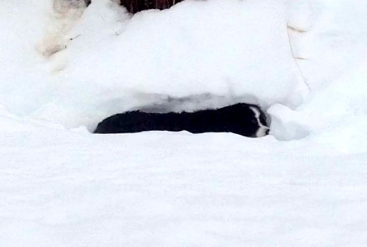 Colorado Dog Found Dead in the Snow Miraculously Survives