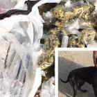 Dog Brings Home $1,000 of Marijuana After Walk