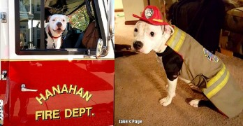 Pit Bull Puppy Burned in Fire Becomes a Firefighter
