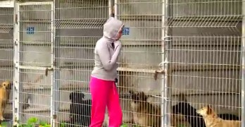 Woman Can't Pick Just One Dog, So She Buys the Whole Shelter