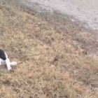 You Won't Believe What This Puppy Does to get out of Leash Training