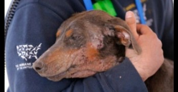 Arkansas Puppy Mill Raid Rescues 295 Dogs